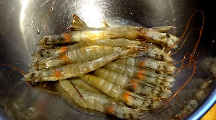 sauce-epinards-crevettes-et-poisson-fume-1